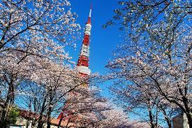 东京市·中央区日本桥公寓